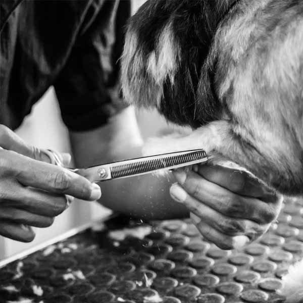 Toelettatura cani Bologna